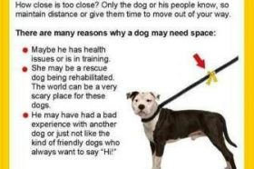 Yellow Ribbons on Dog Leashes: What do they mean?